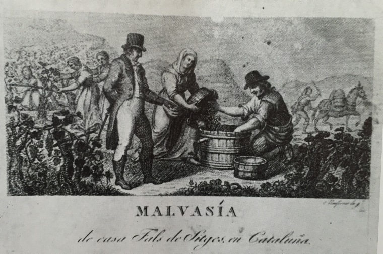 Malvasia de Can Falç, gravador Joan Masferrer