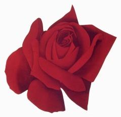 Rosa, de P. Stämpfli