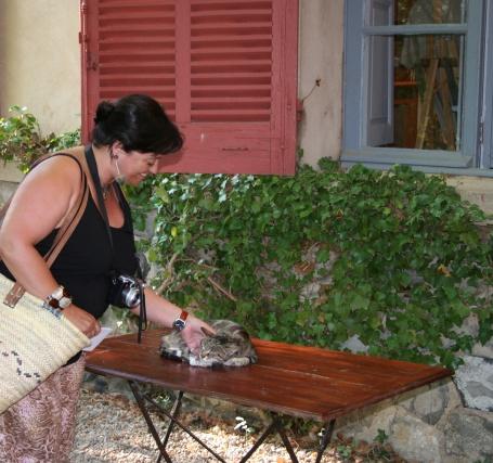 El gat del Taller Cézanne