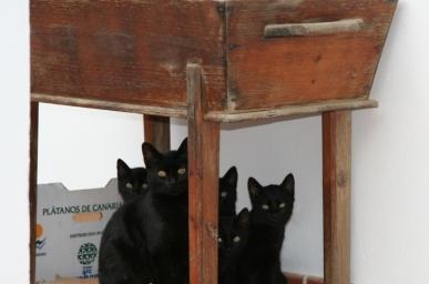 La Mixa i els gatets negres
